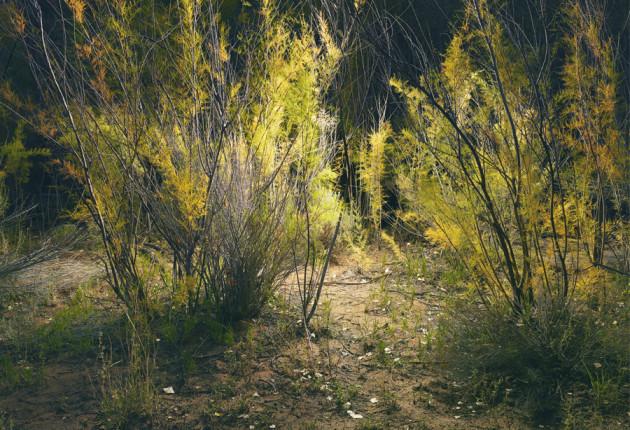 tim-simmons-burr-trail-4.jpg