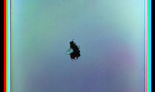 Mudde_Untitled-(Bee)_WEB